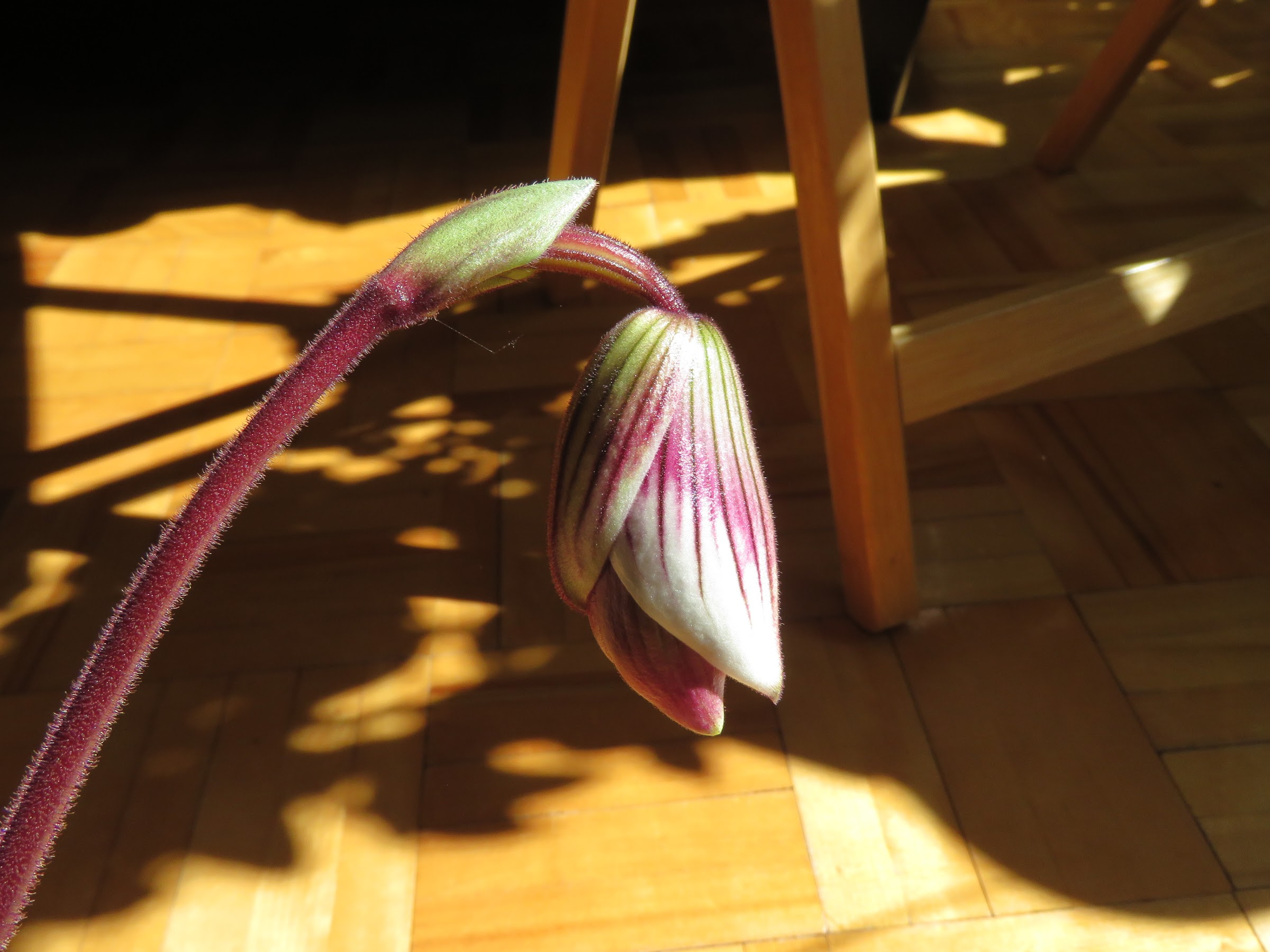 Les orchidées de Grigri - Page 4 ELoX1RBOFPBKbfWm-C4f3QDrLudZl9aRjA_CSpkb3tSbG3eFxMwSmllOi1YbzqViha4l129MBsh7MXHKfi8RULuZgcB9q2MWlXPcK3kF09tphasMeuIrvJYbsPABUfwtTOPBdAnekJw=w2400