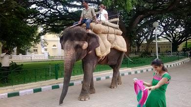 Photo: Mysore palace - šou se slonem