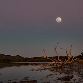 08072017_2928 by Deborah Bisley - Landscapes Starscapes ( water, moon, mountain, rise, sunset, beach, log, dead tree )