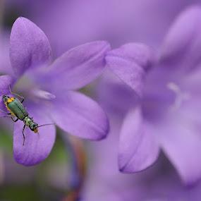 flores con insecto by Lourdes Ortega Poza - Flowers Flowers in the Wild ( insecto, naturaleza, vida, flor, primavera, malva, morada )