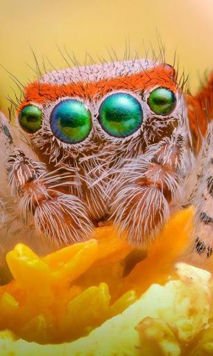 オレンジの花 クモ lwp