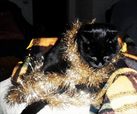Pronti per il Natale!!!! di Trutzy