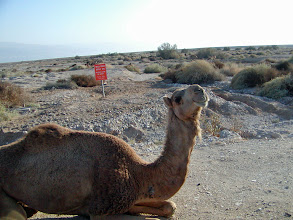 Photo: This camel struck a pose for the camera.