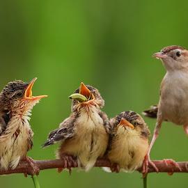Big meal by Bernard Tjandra - Animals Birds