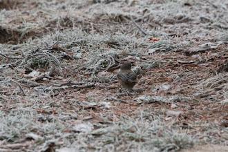 Photo: Kuva-20c. lapintiainen fl (marraskuu) kuvaaja Timo Talala