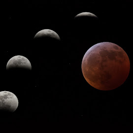 Stages Of The Eclipse by Bud Schrader - Digital Art Things