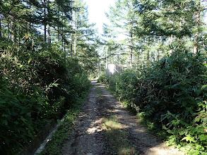 林道を南へ