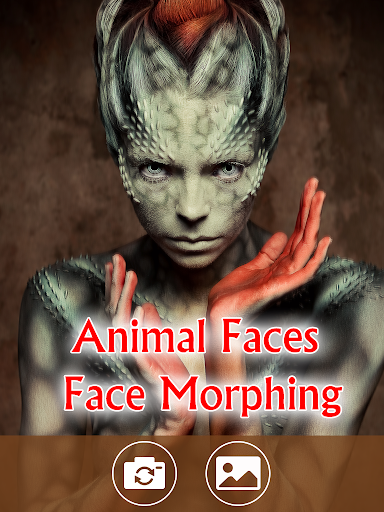 Animal Faces - Face Morphing