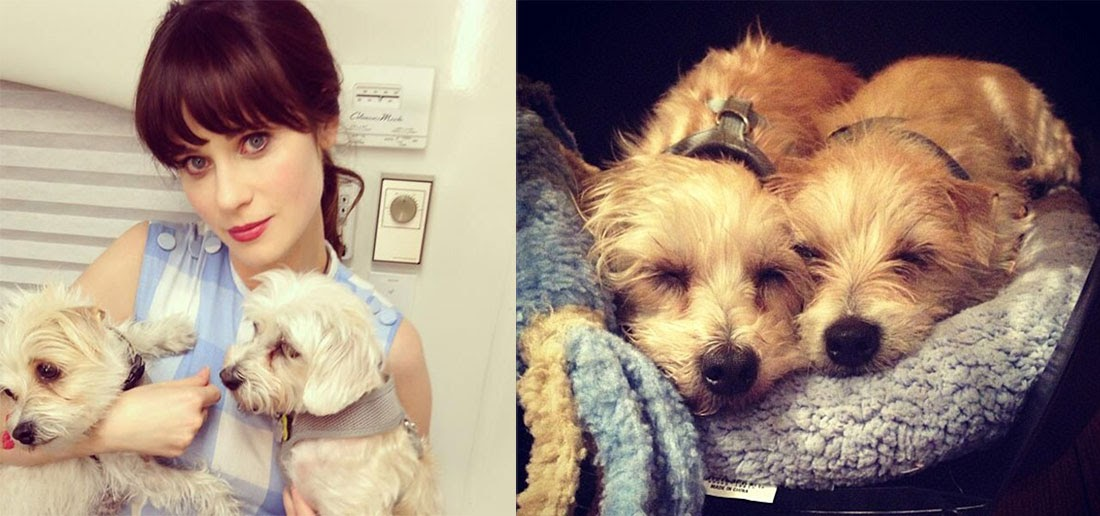 Perros acogidos por famosos: Zooey Deschanel con Dot y Zelda