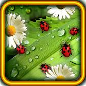 Camomiles n Ladybugs LWP