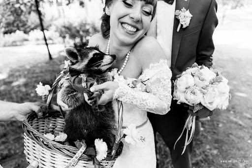 Wedding photographer Pavel Golubnichiy (PGphoto). Photo of 02.11.2016