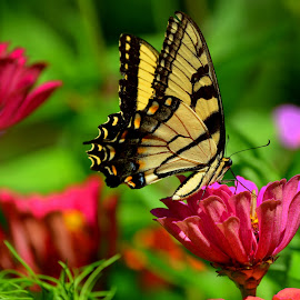 Show Off On Bloom by Larry Bidwell - Animals Insects & Spiders (  )