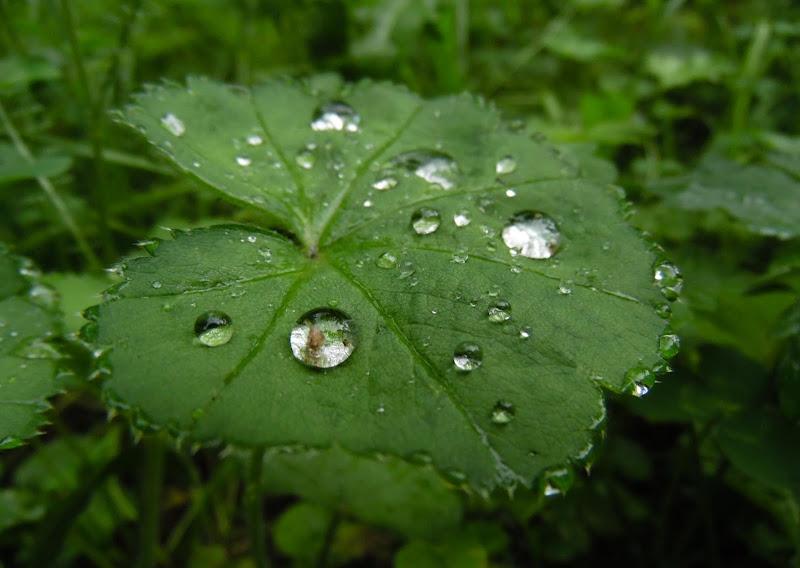 Tracce di pioggia di joysphoto
