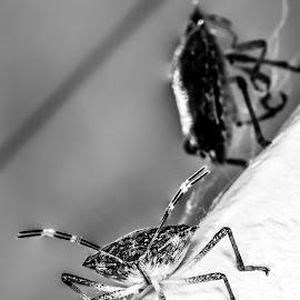 Resurection by Bogdan Rusu - Black & White Macro ( contrast, white, bug, dead, black )