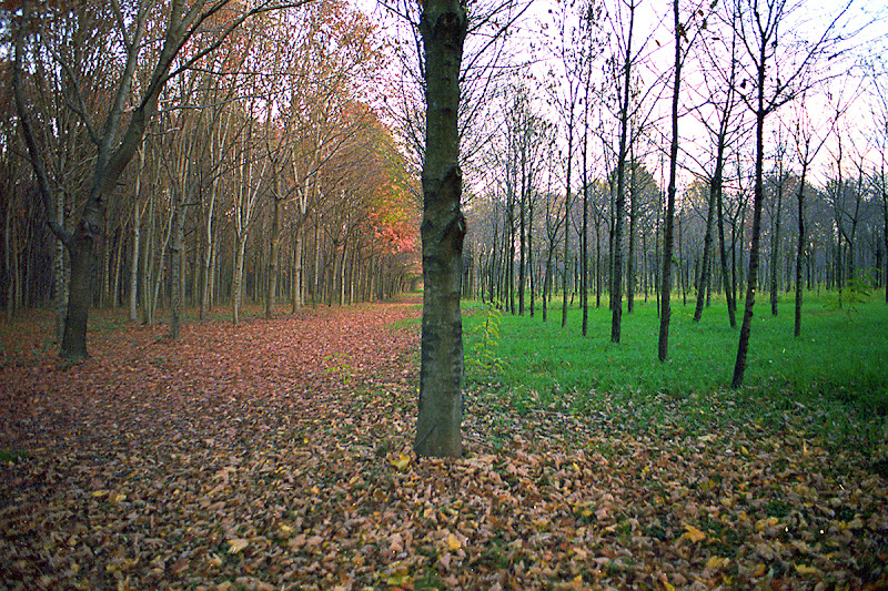 Autumn leaves di Luca Uliana