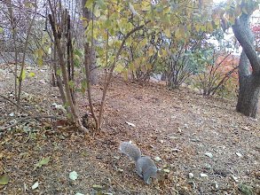 Photo: Unafraid squirrel in Albany
