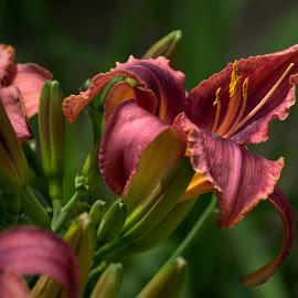 WKBG 1 by Larry Bidwell - Flowers Flower Gardens