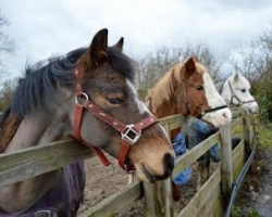 Horse Riding In Braunston, Rutland | The Blue Ball At Braunston