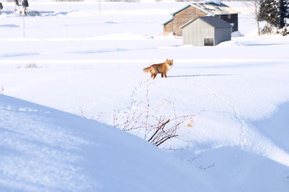 厳冬を逞しく生きる