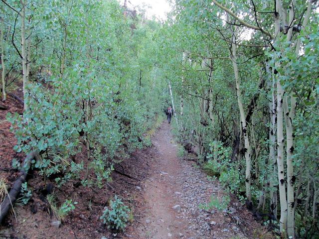 Trail through the aspen