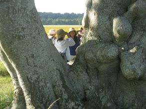 Photo: Jana peeks out from behind the powerful tree guardians of the Kings Barrows