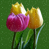 Tulips Snowfall Live Wallpaper