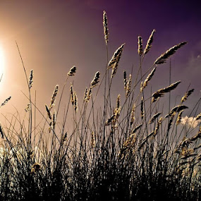 Bright light by Daniel Peiffer - Nature Up Close Leaves & Grasses ( nature, grass, green, weed, light, sun )