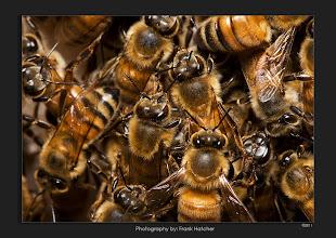 Photo: Honey Bee Hive   Glendale Arizona