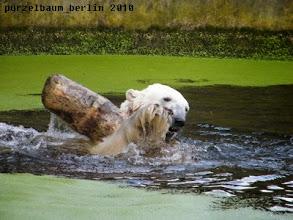 Photo: Wasserspass mit Baumstamm :-)