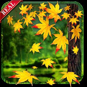 Falling Leaves Hd Live Wallpaper Apk Download Real Autumn Live Wallpaper Apk To Pc Download