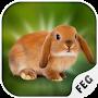 Escape Games - Rabbit River