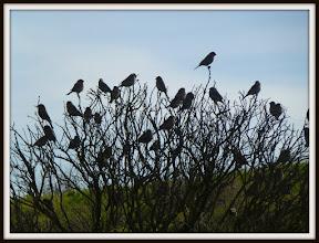 Photo: A flock of finches, Cesar Chavez Park, Berkeley