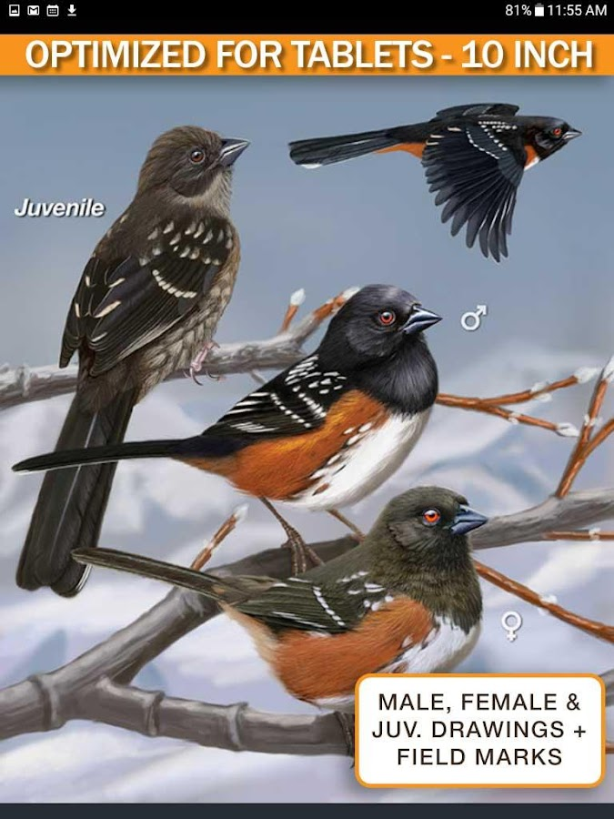 iBird Yard Plus Guide to Birds- screenshot