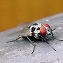 Fly spotting