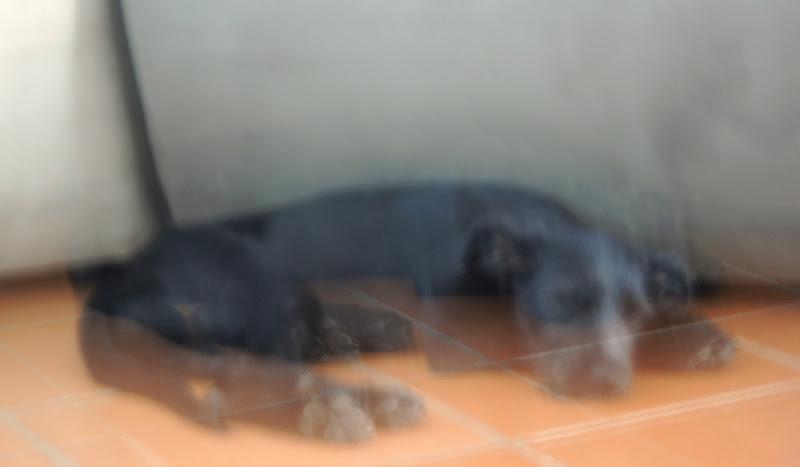 un cane spiritato..... di nadiuzza9