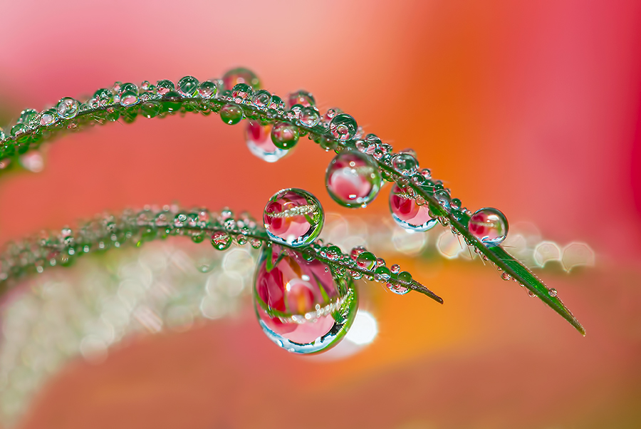* Like a diamonds * by Citra Hernadi - Nature Up Close Water
