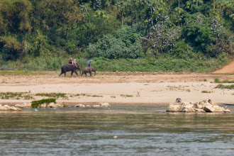 Photo: These were the only elephants that we saw away from a tourist site.
