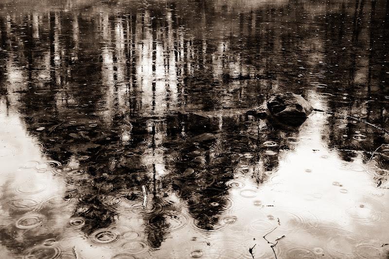 Come un quadro bagnato di Barbara Surimi