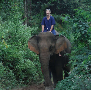 Solo Woman traveler in Laos Riding an Elephant after a day of Mahout Training