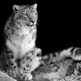 by Shawn Thomas - Black & White Animals (  )