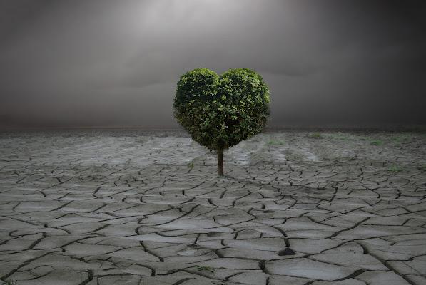 For evergreen lovers di Daniela Ghezzi