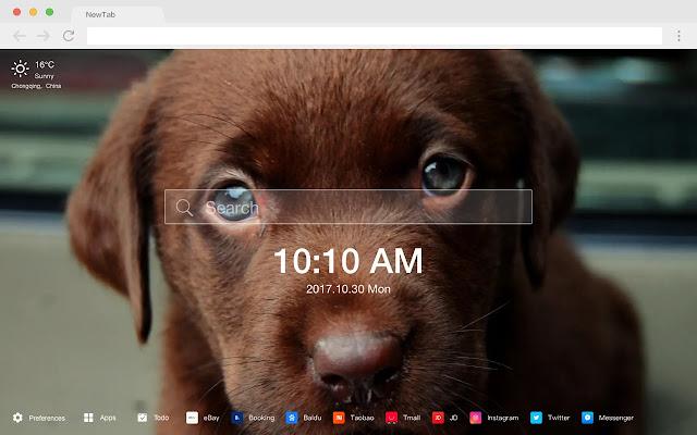 Labrador Popular Pets New Tabs HD Themes