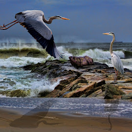 by Augustine Juliano - Digital Art Animals