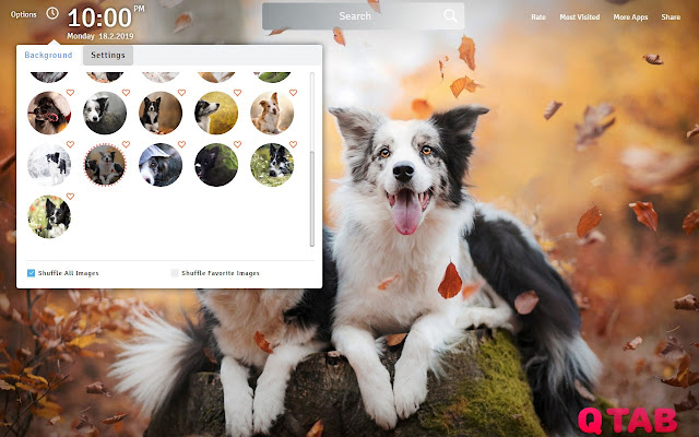 Border Collie Wallpapers Border Collie Theme
