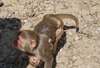 Photo: Mutter mit Kind