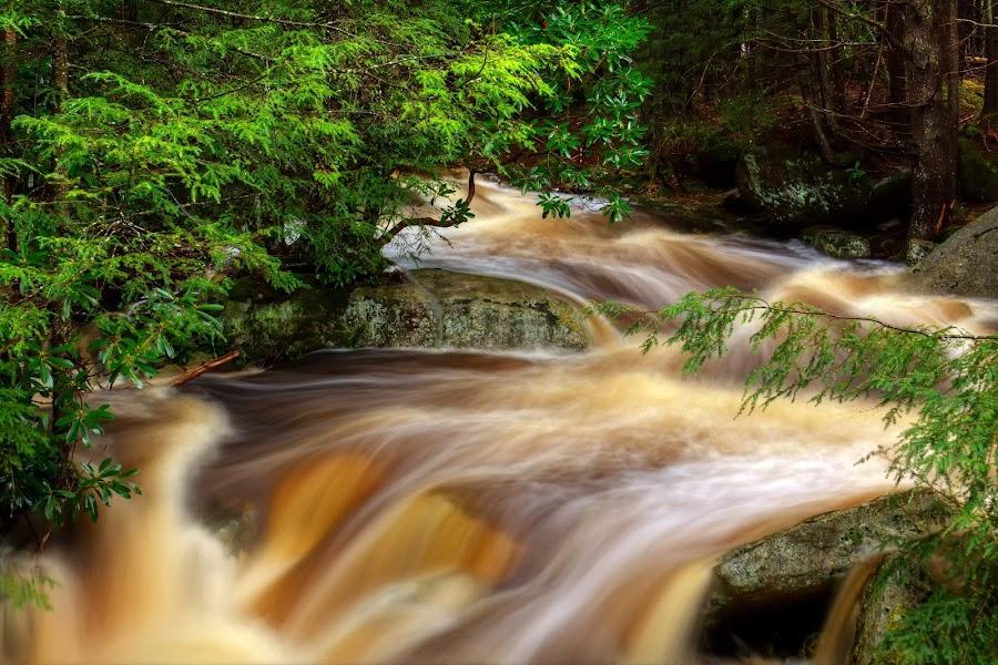 Black Water Falls by Patrick Morgan - Landscapes Travel ( water, nature, west virginia, falls, fine art, landscape, black water falls )
