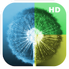 Wallpapers - Dandelion WallHub icon