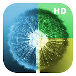 Dandelion WallHub (Wallpapers) Icon