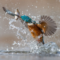 the kingfisher di