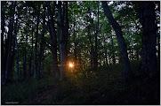 Photo: Hartmannswillerkop o Vieil-Armand. Los Vosgos   Alsacia ( Francia) http://www.viajesenfamilia.it/Alsacia.htm